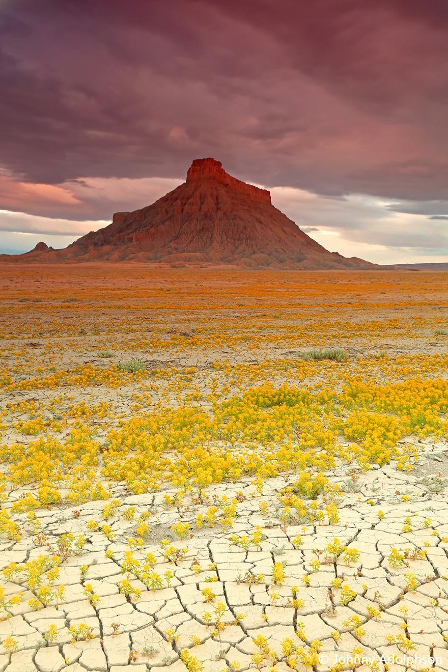 blooming-desert-badlands-utah-12