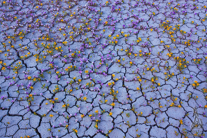 blooming-desert-badlands-utah-2