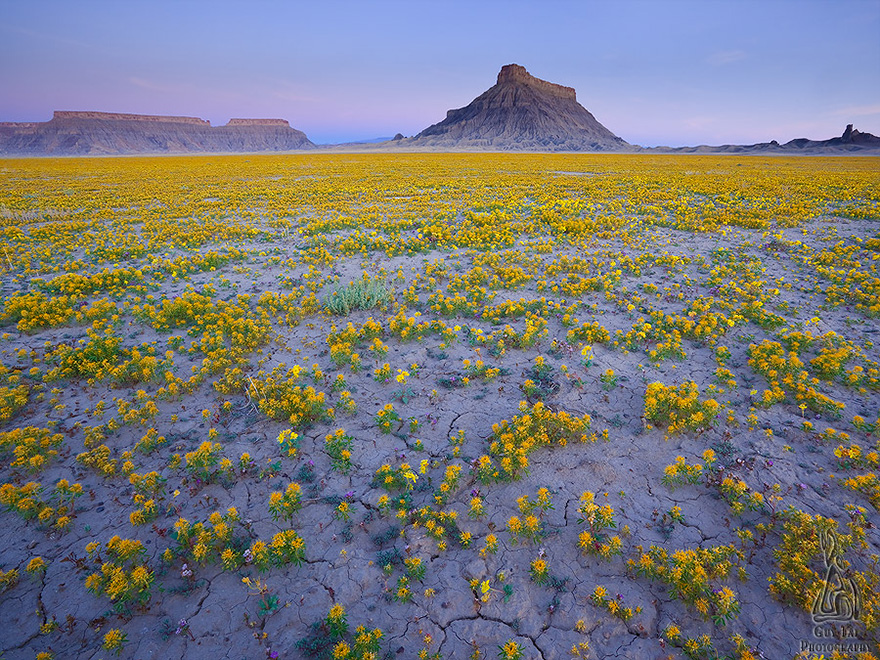 blooming-desert-badlands-utah-7