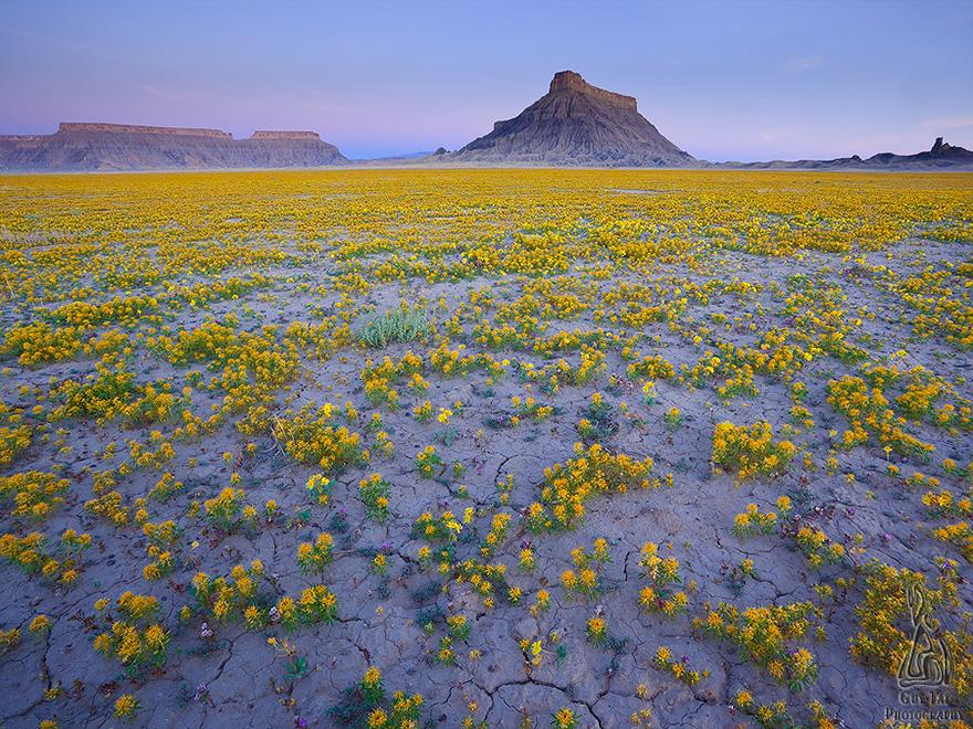 blooming-desert-badlands-utah-7