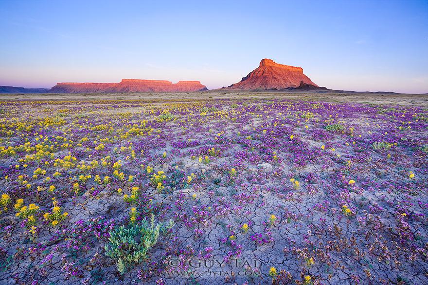 blooming-desert-badlands-utah-9