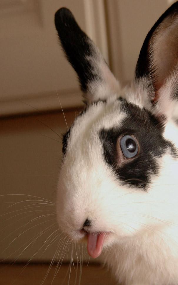 cute-bunnies-tongues-1