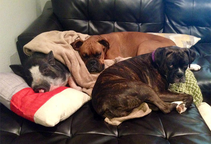 Dogs Like Poop Couch