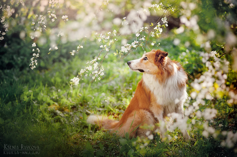 dog-photography-ksuksa-raykova-47