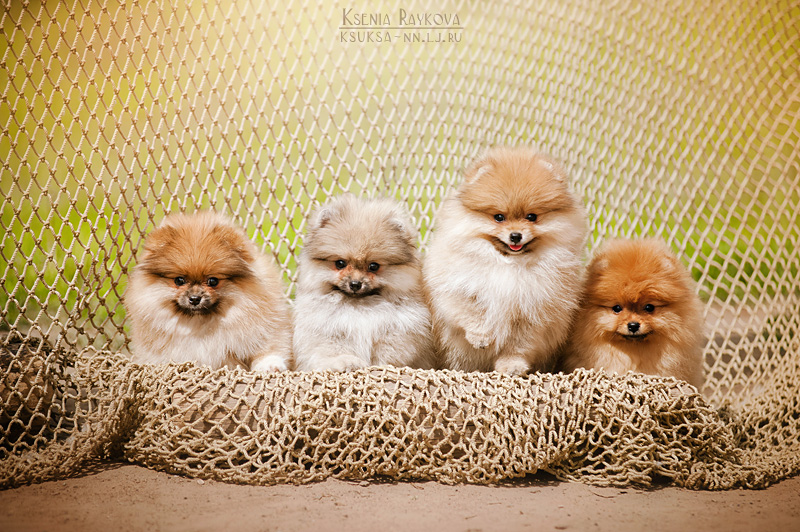 dog-photography-ksuksa-raykova-5