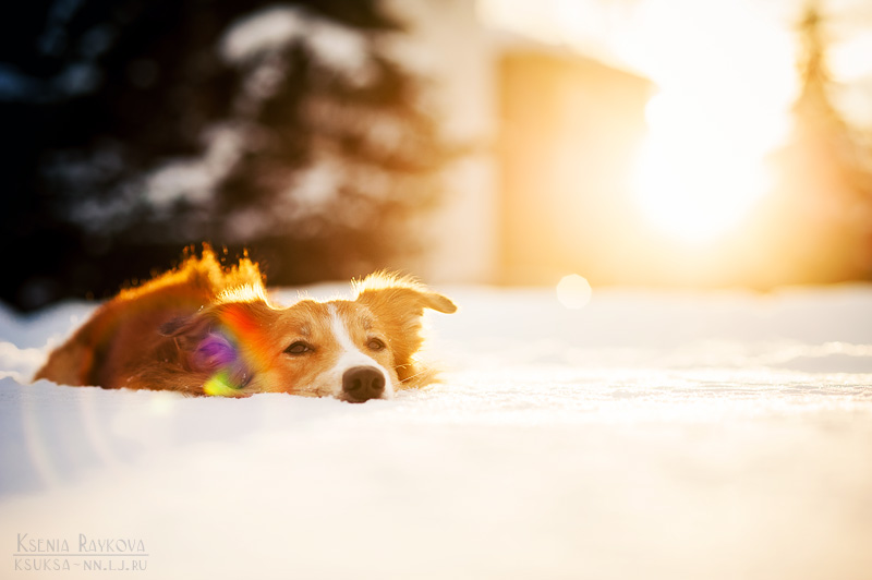 dog-photography-ksuksa-raykova-6