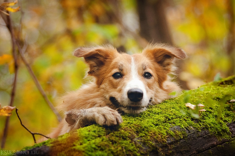 dog-photography-ksuksa-raykova-71