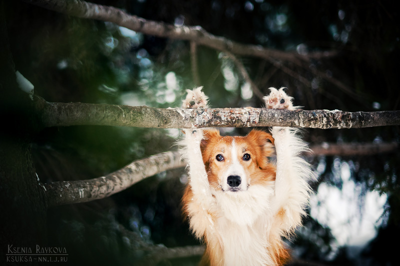 dog-photography-ksuksa-raykova-8