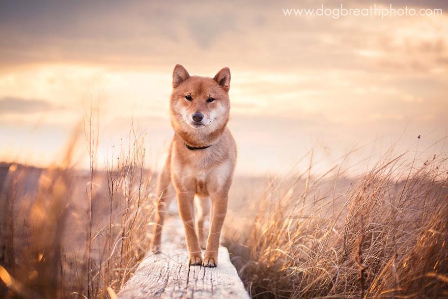 dogs-dog-breath-photography-kaylee-greer-7