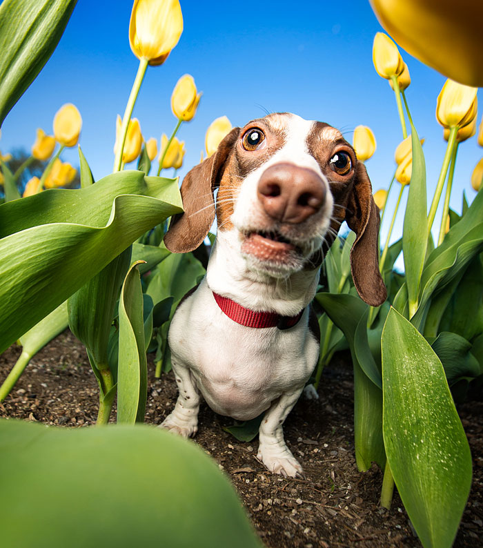 Photographer Lives Her Dream By Taking Expressive And Playful Dog Photos