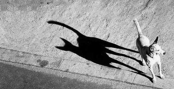 funny-shadow-fails-illusions-38
