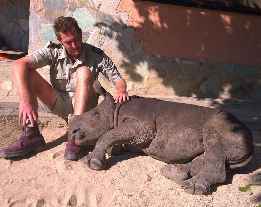 gertje-baby-rhino-rescue-hoedspruit-endangered-species-centre-6