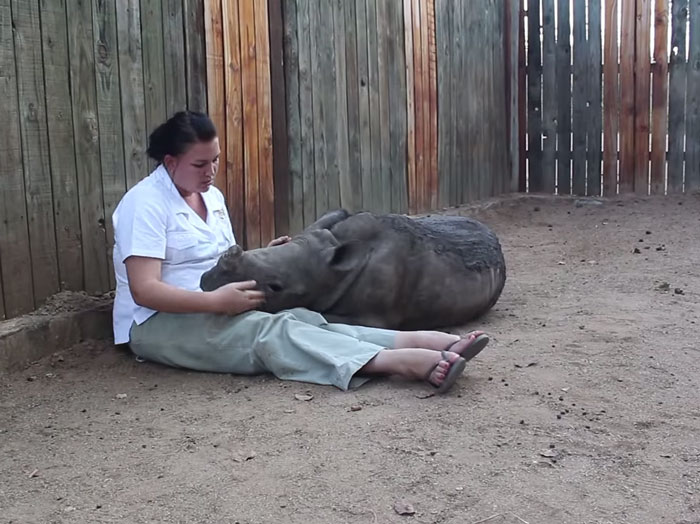 Baby Rhino Scared To Sleep Alone At Night After Losing Mother To Ruthless Poachers