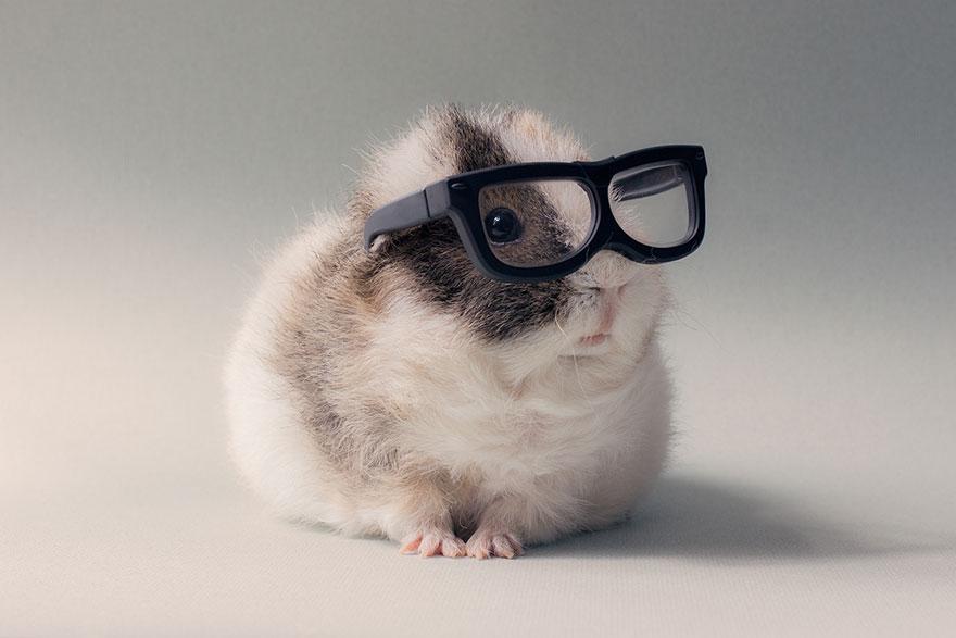 guinea-pig-booboo-lieveheersbeestje-23