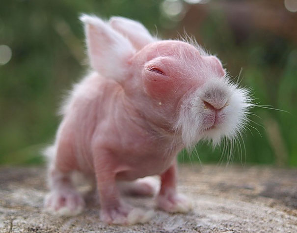 naken hamster