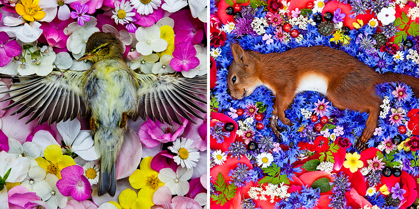 Artist Honors Dead Animals By Photographing Them Beautifully On Beds Of Flowers