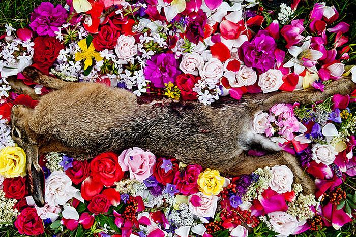 honoring-dead-animals-natura-morte-marina-ionowa-gribina-5