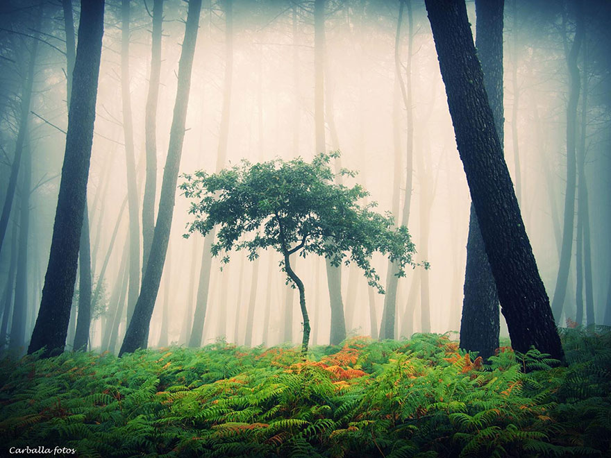 mystic-forest-lanscapes-guillermo-carballa-4