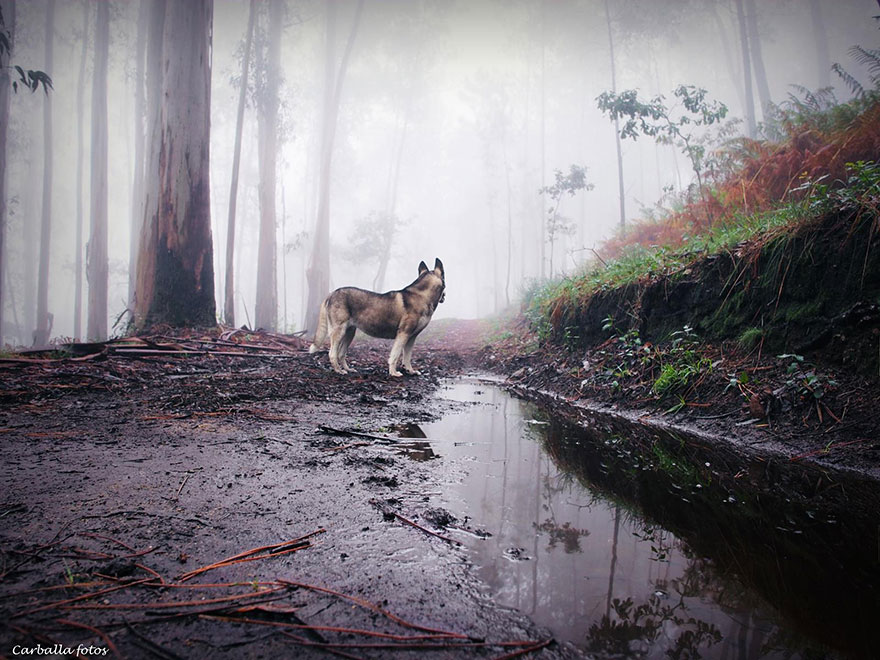 mystic-forest-lanscapes-guillermo-carballa-5