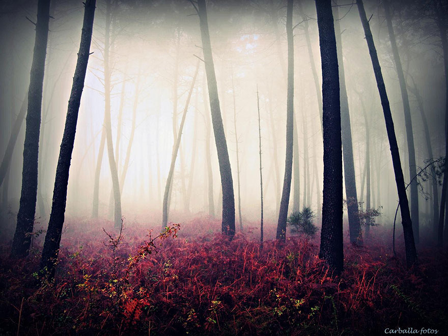 Mystical Spanish Forests Captured In Enchanting Photos By Guillermo Carballa