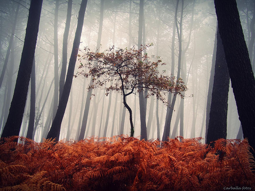 Mystical Spanish Forests Captured In Enchanting Photos By