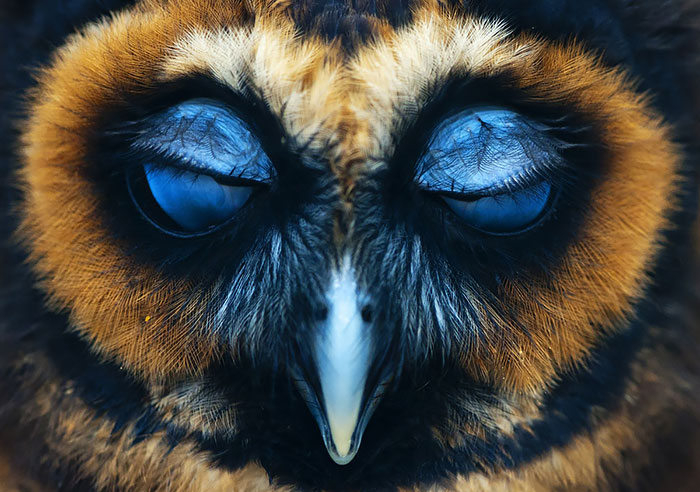 112 Majestic Owls Caught On Camera