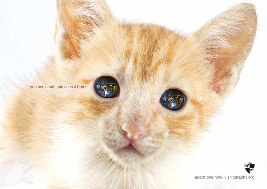 Where To Adopt Cats In Philippines