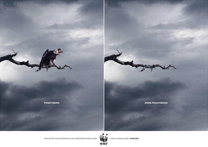Wwf Ads 2014