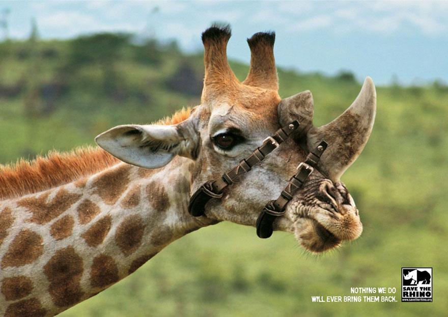 hayvanların hakları nelerdir