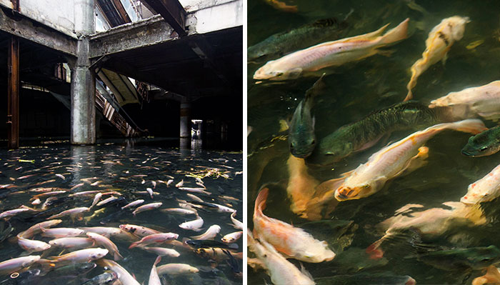 This Abandoned Shopping Mall In Bangkok Has Been Taken Over By Fish