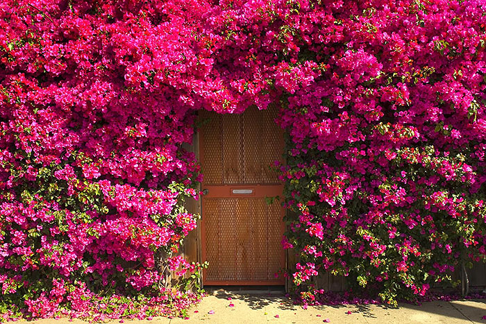 amazing-old-vintage-doors-photography-25 & 30 Beautiful Doors That Seem To Lead To Other Worlds | Bored Panda Pezcame.Com