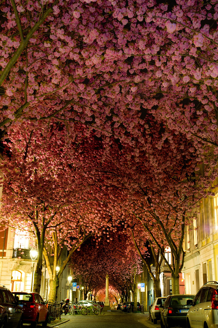 16 of the most magnificent trees in the world bored panda this beautiful tunnel of cherry blossoms blooms in bonn germany in april to see more tunnels like this one click here image credits adas meliauskas izmirmasajfo