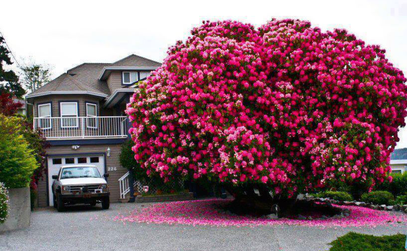 16 of the most magnificent trees in the world bored panda mightylinksfo