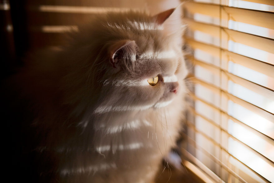 cat-waiting-window-12