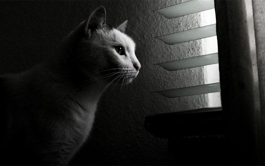 cat-waiting-window-3