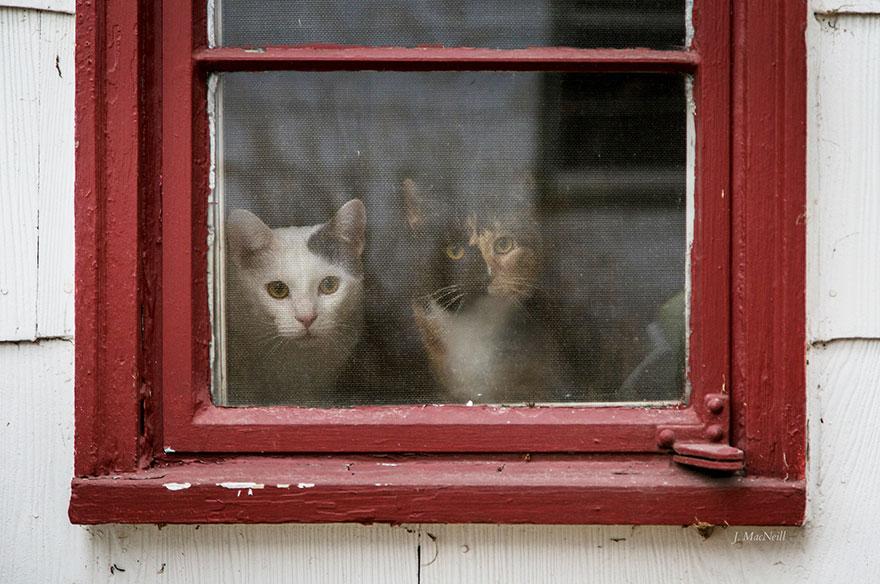 cat-waiting-window-35