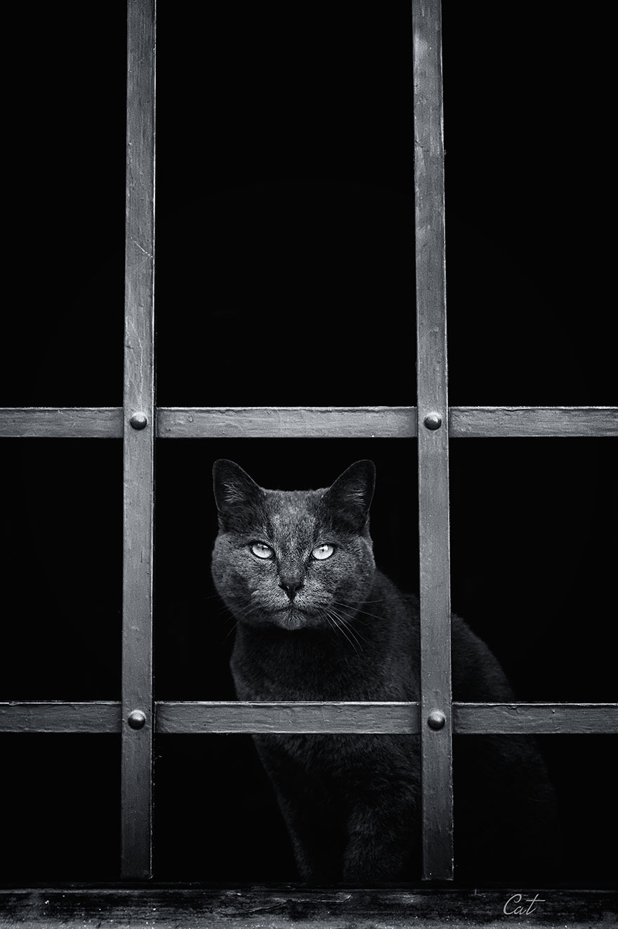 cat-waiting-window-47