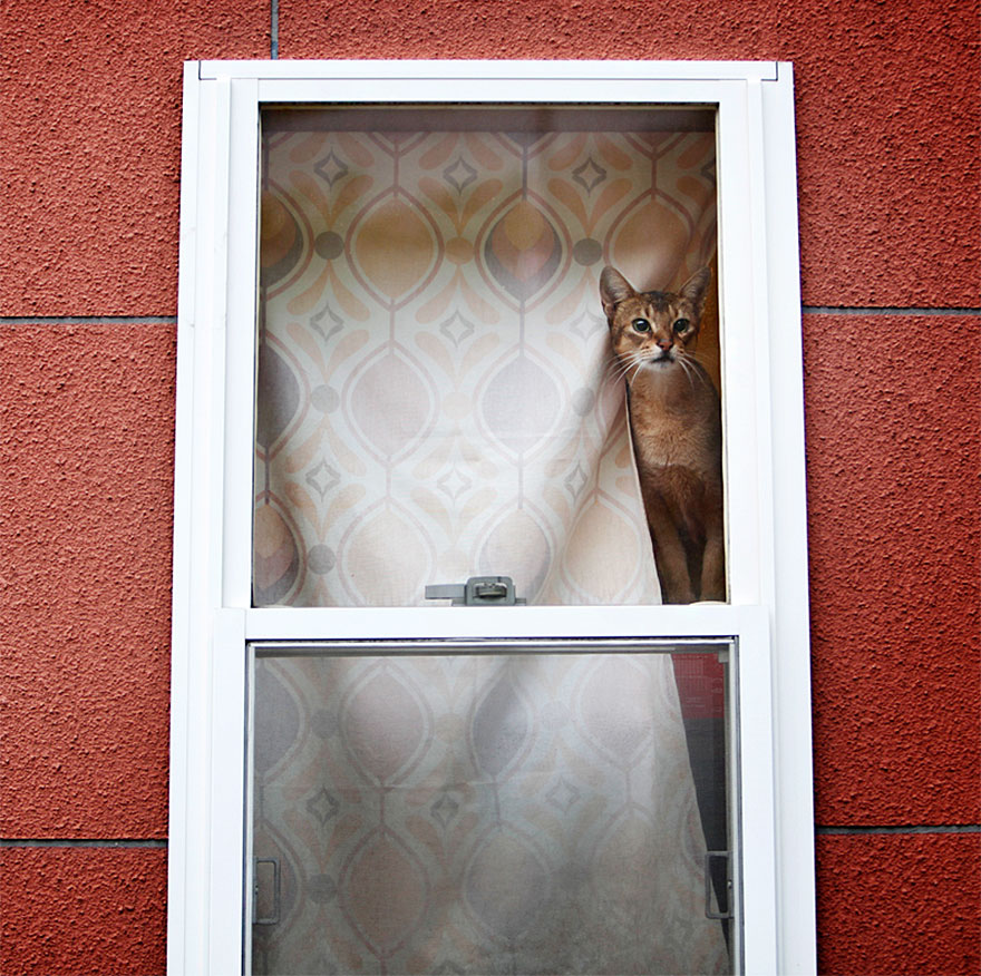 cat-waiting-window-5