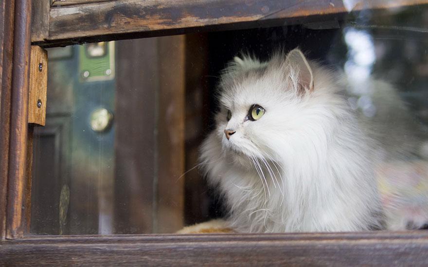 cat-waiting-window-57