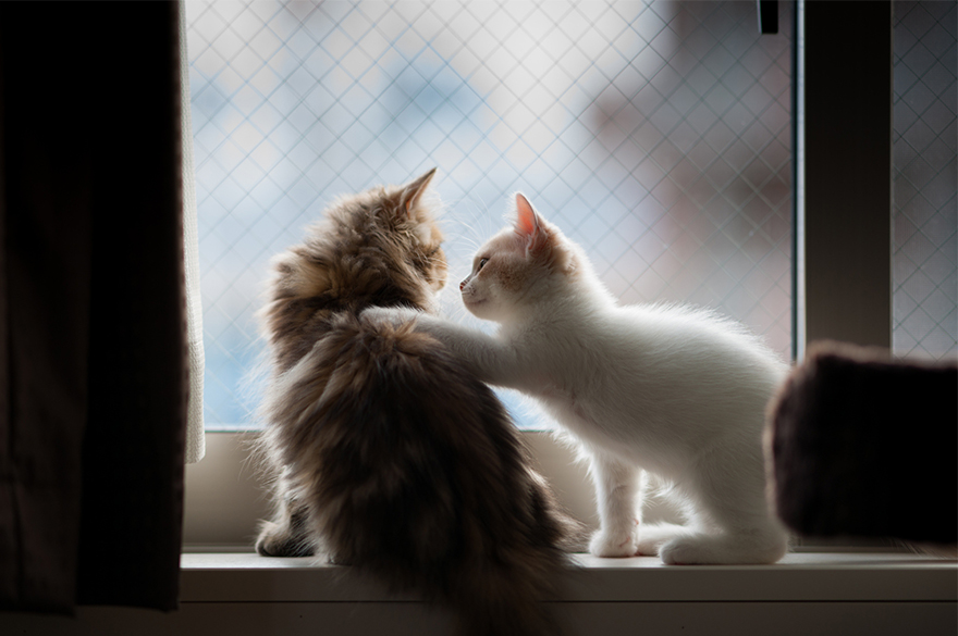 cat-waiting-window-68