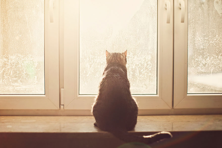 cat-waiting-window-9