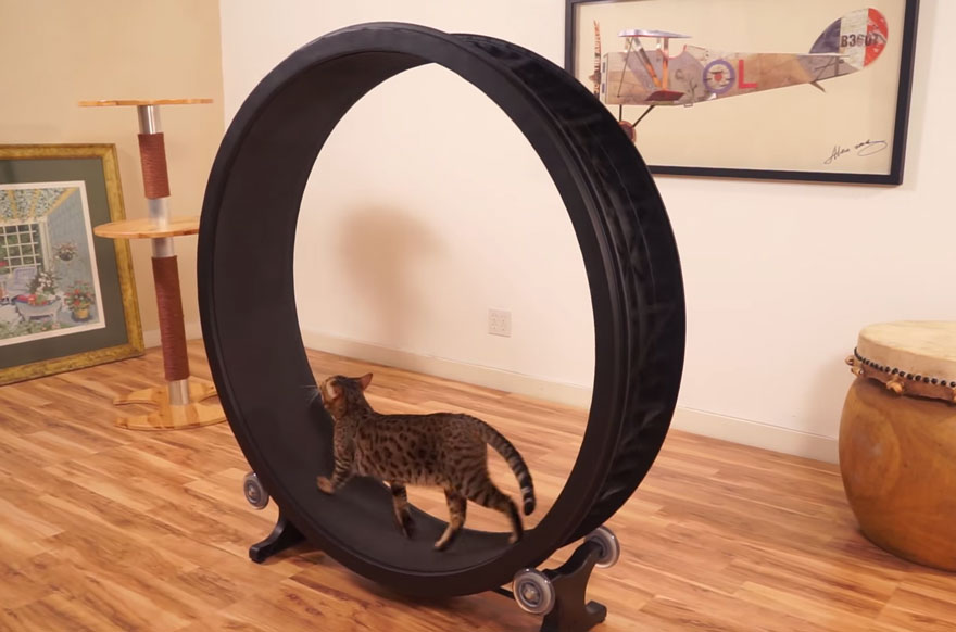 cat-wheel-treadmill-one-fast-cat-1