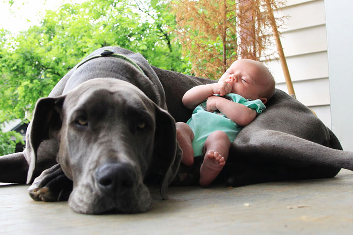 22 Little Kids And Their Big Dogs | Bored Panda