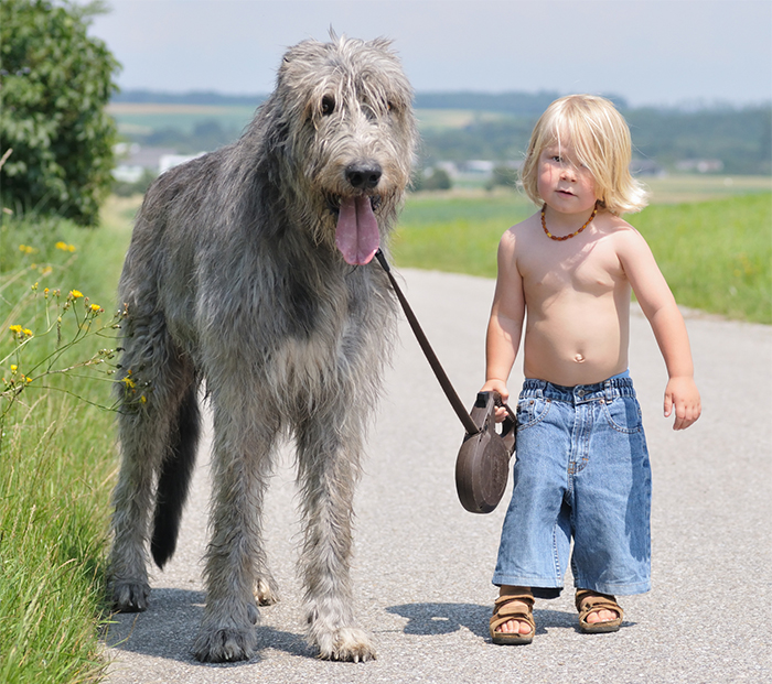 cute-big-dogs-and-babies-33