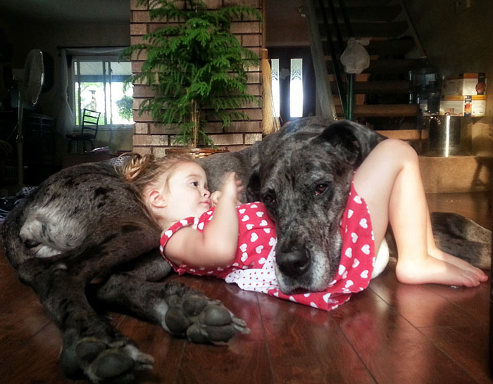 cute big dogs and babies 5 - Small Kids Picture