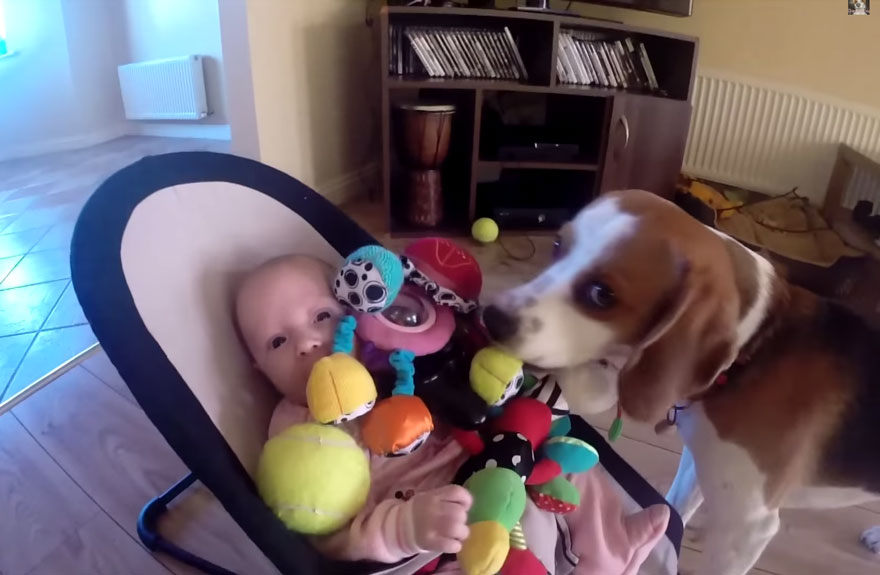 dog-returns-baby-toys-laura-charlie-6