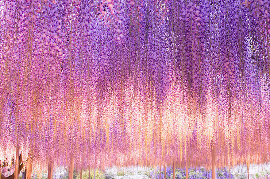 Tree that looks like wisteria