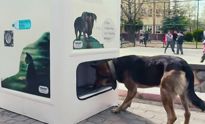 stray-dog-food-vending-machine-recycling-pugedon-6