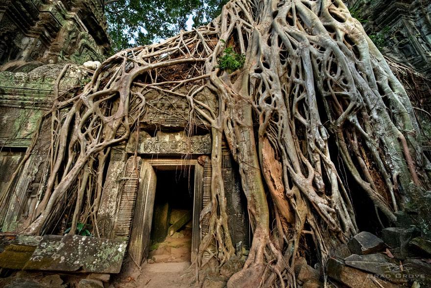 tree-roots-concrete-pavement-5