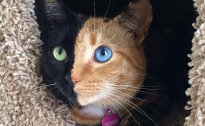 Meet Venus, A Cat With Two Faces